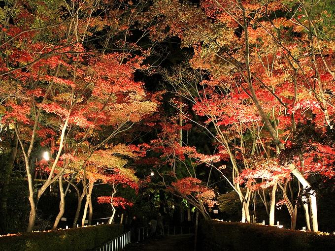 松雲山荘 紅葉のライトアップ