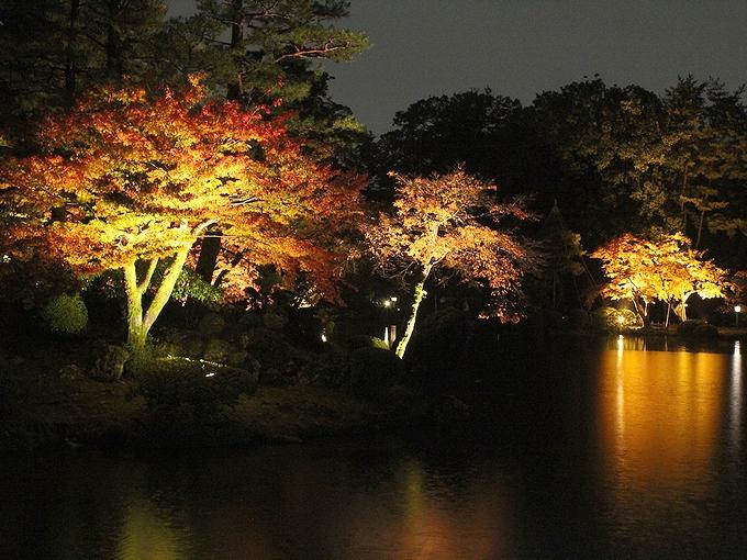 兼六園紅葉ライトアップ 霞ヶ池の島のモミジ