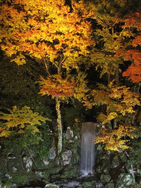 兼六園紅葉ライトアップ 翠滝の紅葉