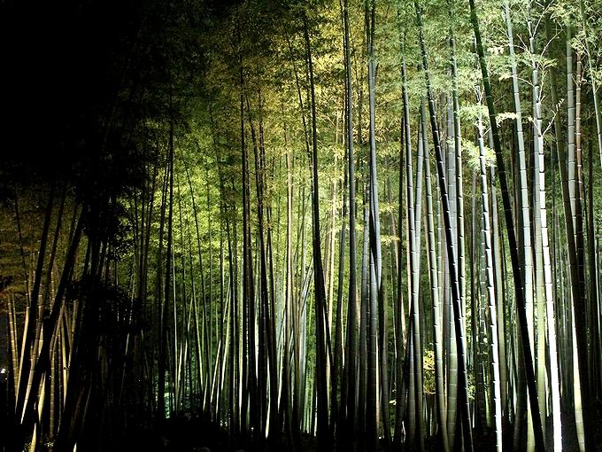 高台寺ライトアップ 竹林