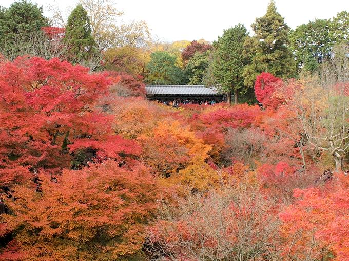 東福寺の紅葉 通天橋から