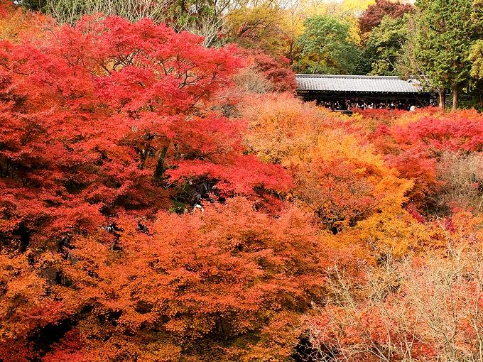 東福寺 通天橋から見た紅葉