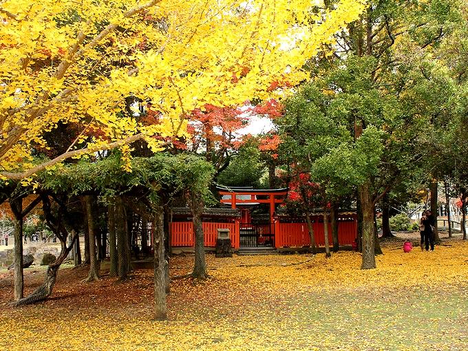 奈良公園 銀杏の黄葉