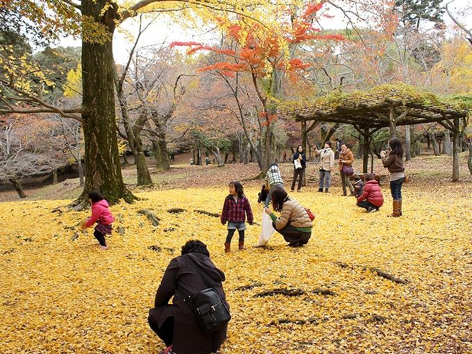 奈良公園の黄葉