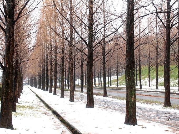 初めての積雪 太陽が丘の並木道
