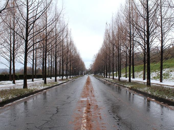 初冬の並木道 金沢市太陽が丘
