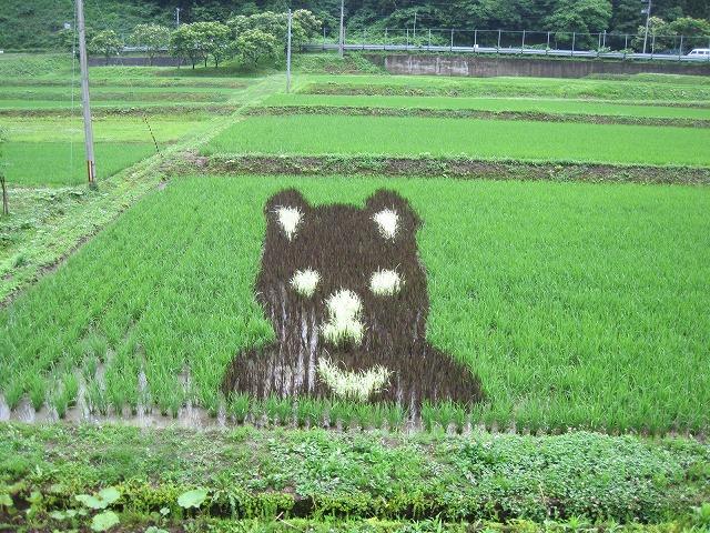 田んぼアート 20130705 02