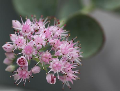 小さい小さいお花です