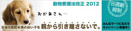 8syu_c_main_M.jpg