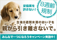 8syu_c_side_L.jpg