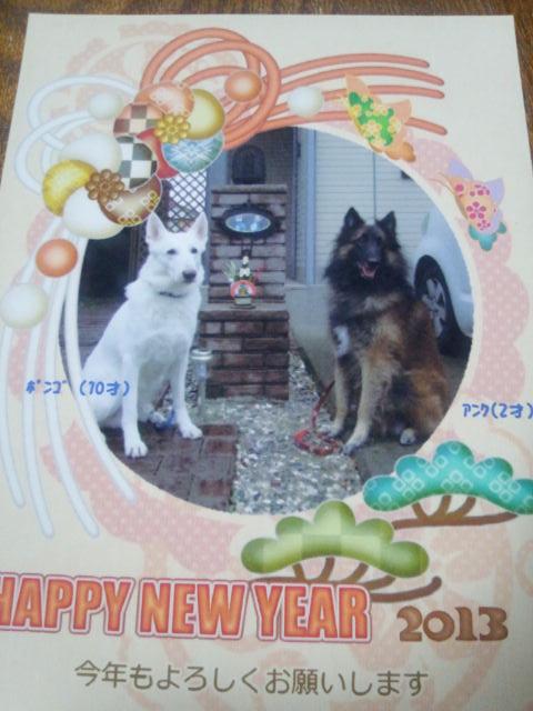 ホワイトスイスシェパード★ポンゴくん★2013年年賀状