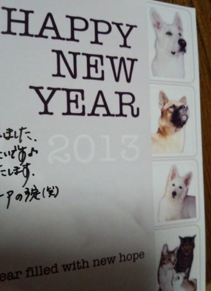 ホワイトスイスシェパード★ルーア★2013年年賀状