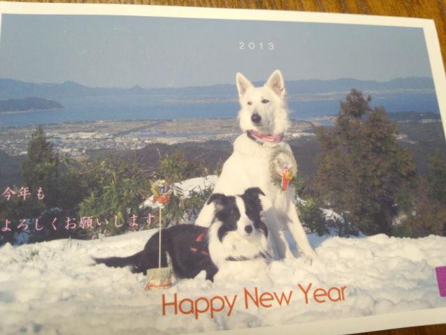 ホワイトスイスシェパード★ビオラ★2013年年賀状