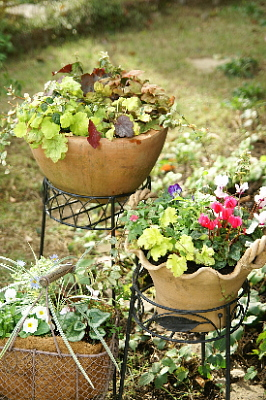 1113-6寄せ植え3鉢