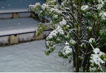 初雪!13.1.14
