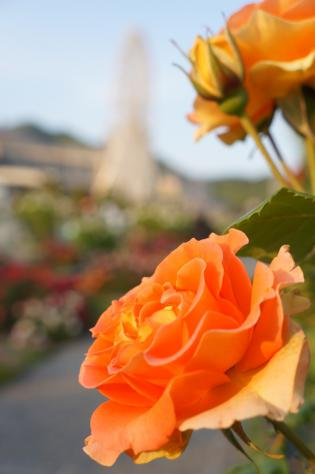 オレンジ薔薇観覧車