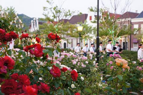 薔薇とバグパイプ