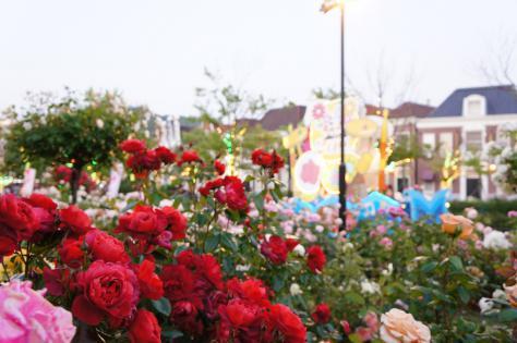 薔薇とパレードカー