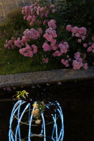 ピンクの薔薇と水面