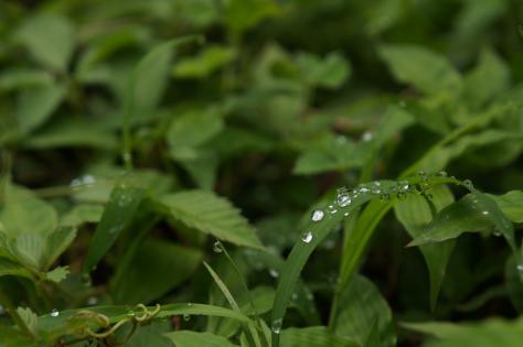 葉の上の滴