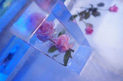 氷のテーブル薔薇