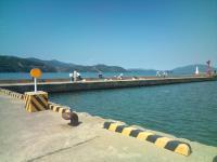 サヨリ釣り風景