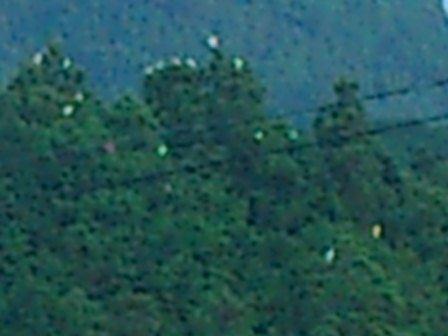 20120712-1.jpg