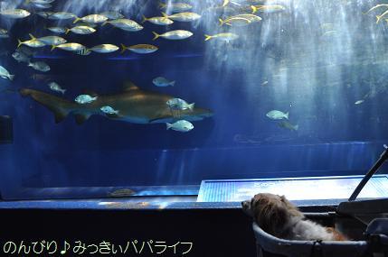 aburatsubo12.jpg