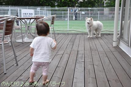dogcafe4.jpg