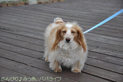 doggarden6.jpg
