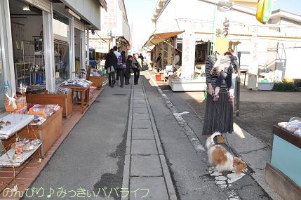 jogashima01.jpg