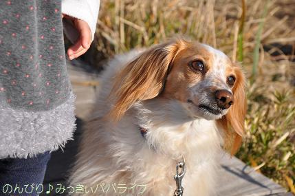 jogashima05.jpg
