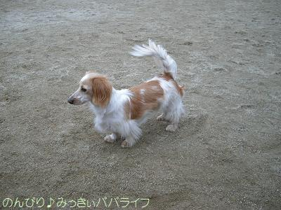kiyosato201201.jpg