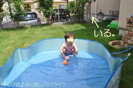 pool02.jpg