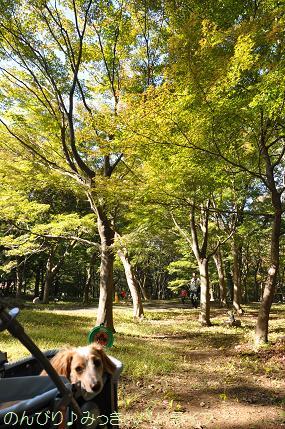 shinrinkoen201209.jpg