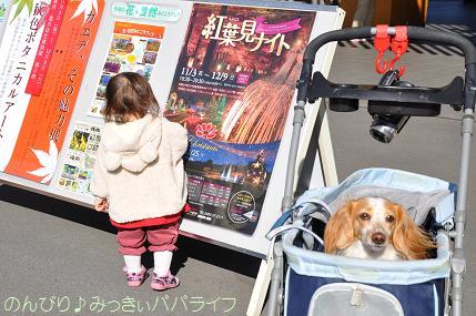 shinshikoen20120202.jpg