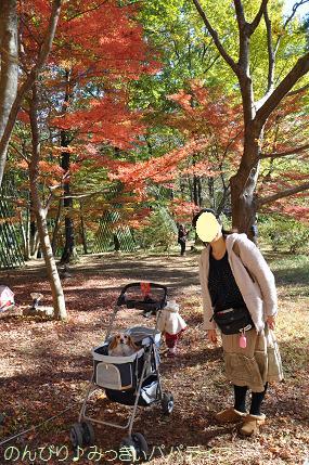 shinshikoen20120204.jpg