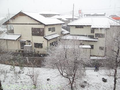 snow20130102.jpg