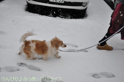 snow20130104.jpg