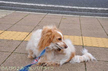 tateyama201207008.jpg