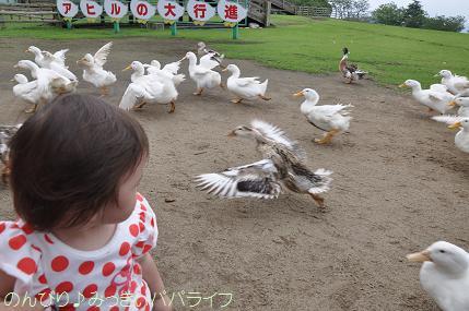 tateyama201207023.jpg