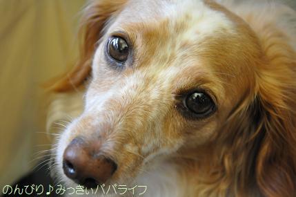 tateyama201207074.jpg