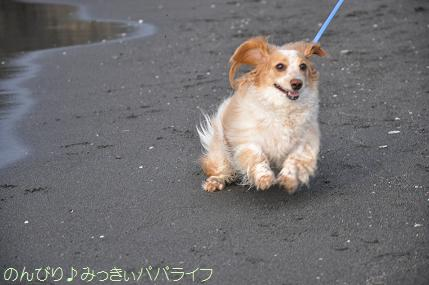 tateyama201207083.jpg
