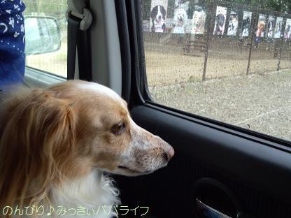 wanwan2012.jpg