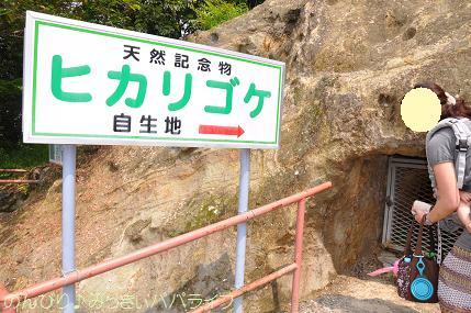 yoshimi03.jpg