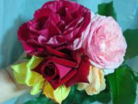 20120509 うちのバラたち