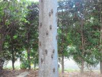 20120801 庭の蝉たち
