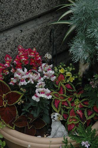 niwaDSC_3888.jpg