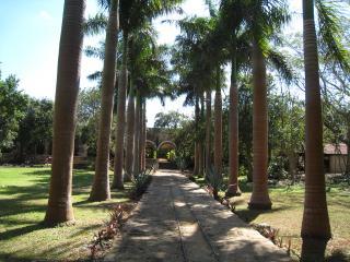 トックリヤシの並木道