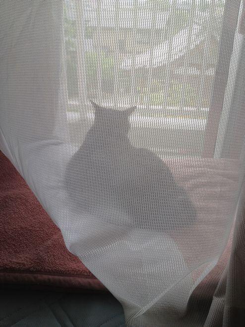 窓辺でたそがれる